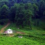 Walking In Dalkhani Jungles