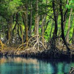 Mangrove jungle(Hara jungle)