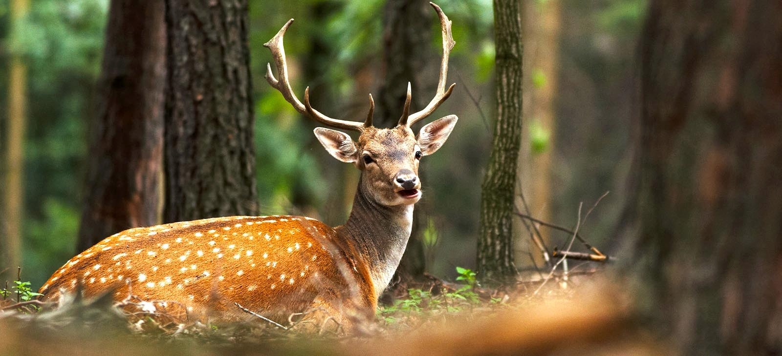 iranian deer s travels